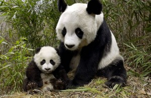 mothers-and-cubs-01